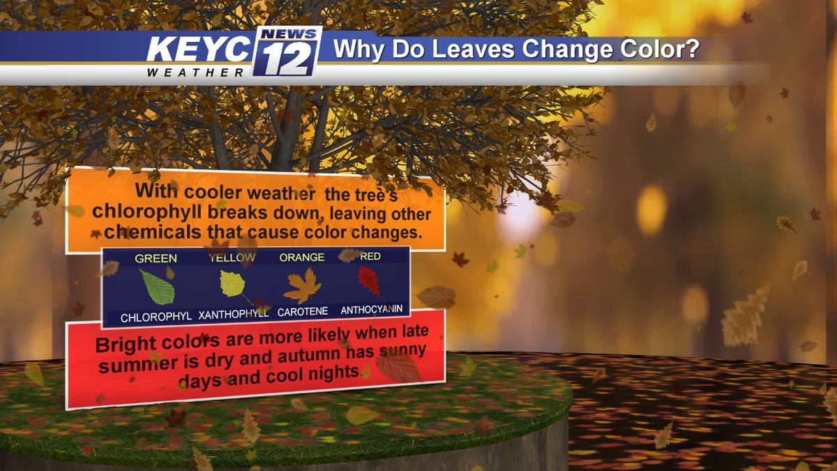 Seasons are changing and so are the leaves. Here is a quick explanation to what causes the...