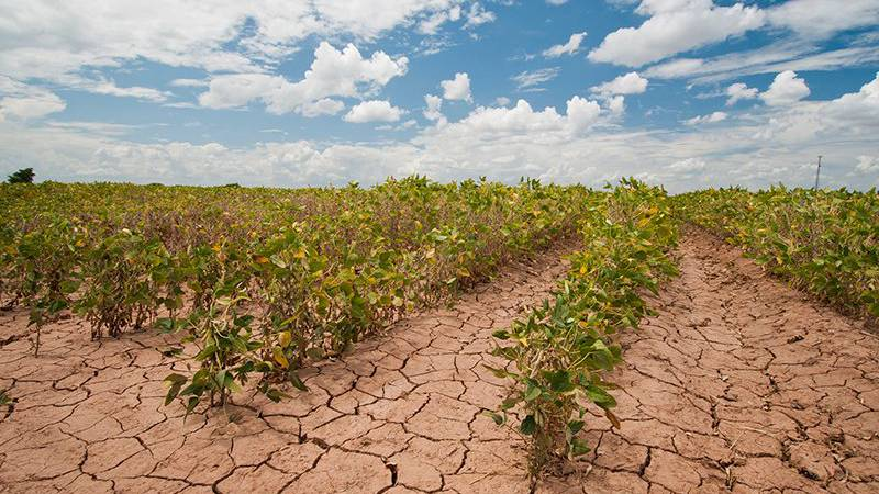 FILE — Soybeans show the effects of a 2013 drought in Texas in this file photo. Government...