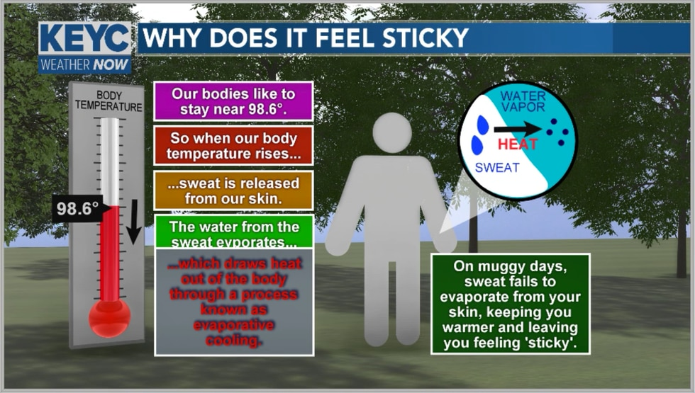 As our body temp rises we sweat. Sweat is just water leaving the body and as it does it...
