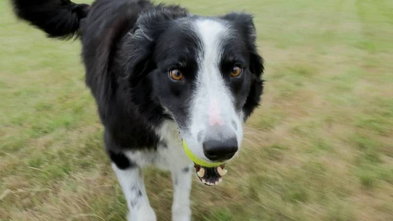Dog park coming to Waseca.