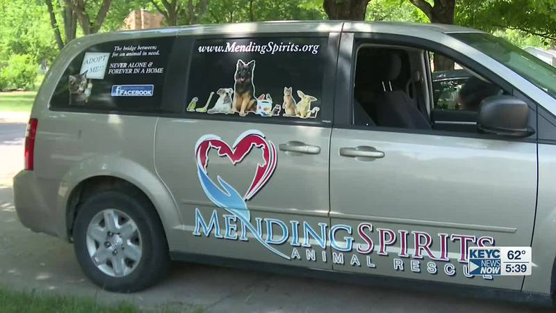 Celebrating eight years in operation, Mending Spirits Animal Rescue has managed to rescue...