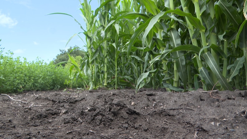 With the recent rainfall, some of the farmers are calling it the trillion dollar rain